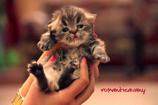 Rosina, la gattina di Vany