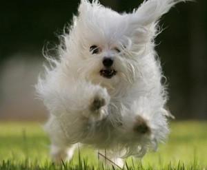 cagnolino.jpg