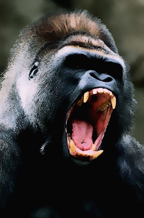 iannozzi giuseppe gorilla inferocito