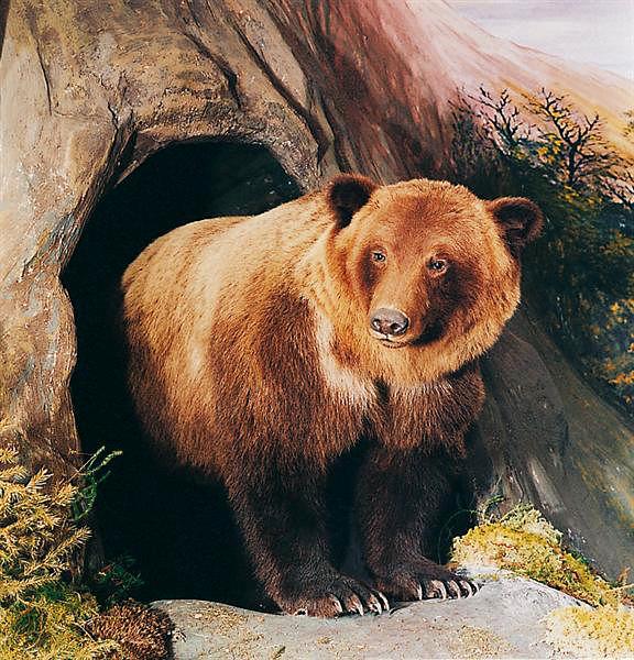 l'orso nella sua caverna