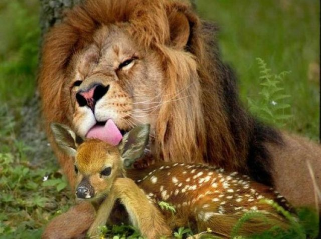 leone e cerbiatto