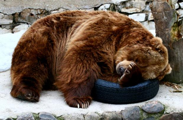 orso che dorme